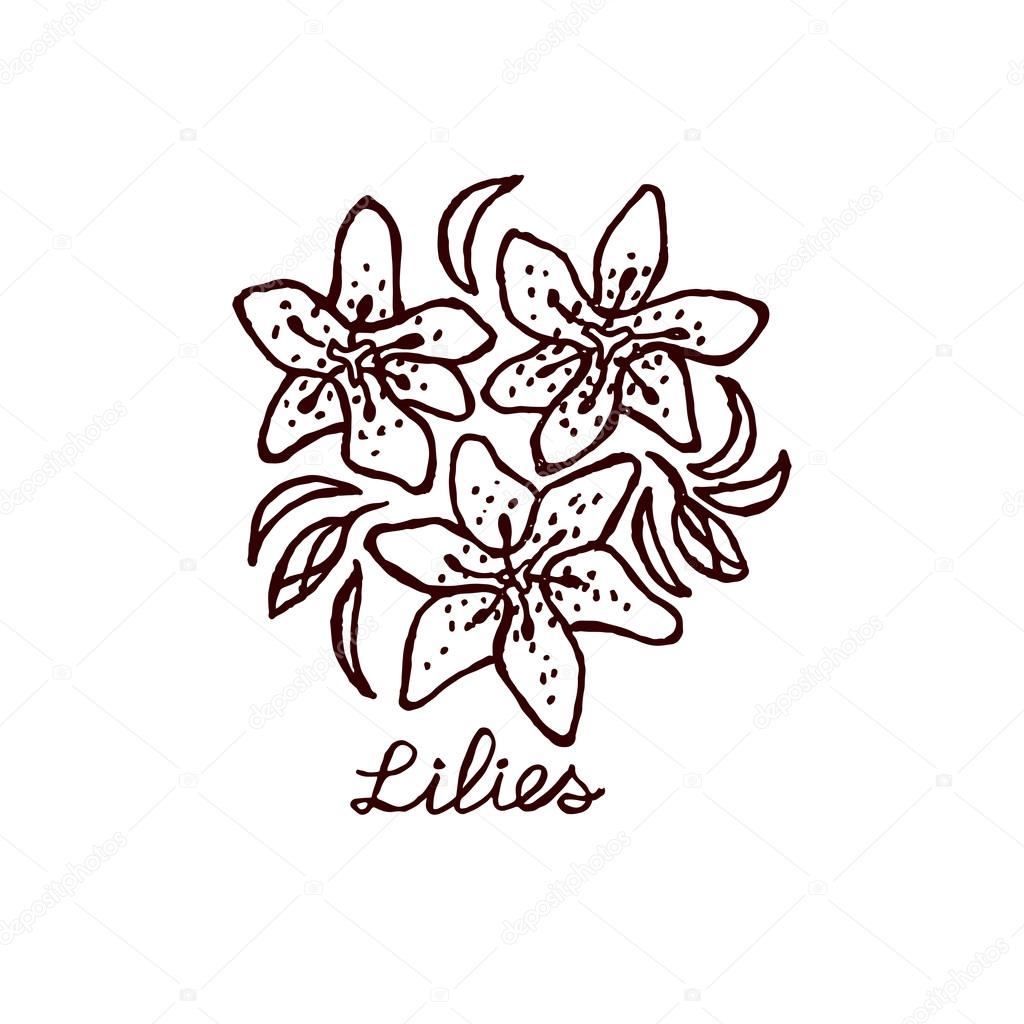 Handsketched bouquet of lilies