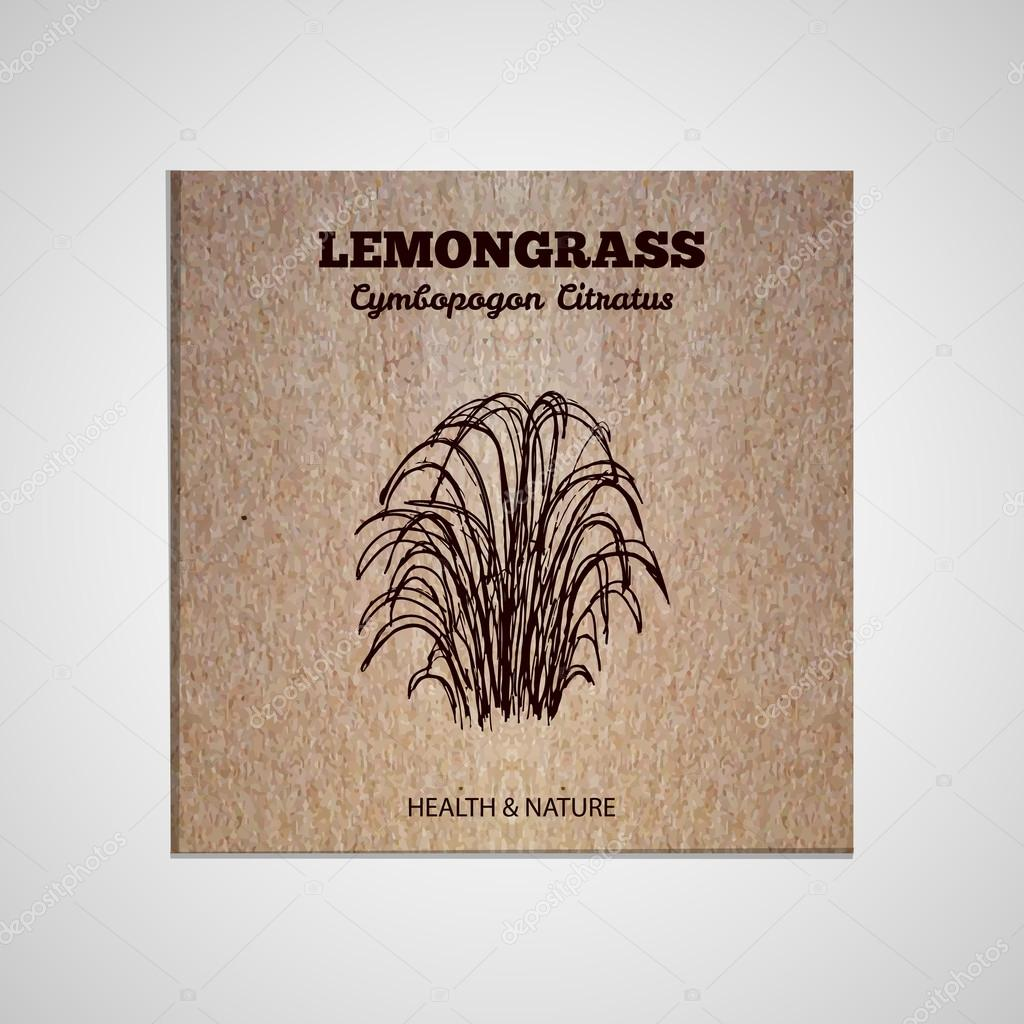 Herbs and Spices Collection - Lemongrass