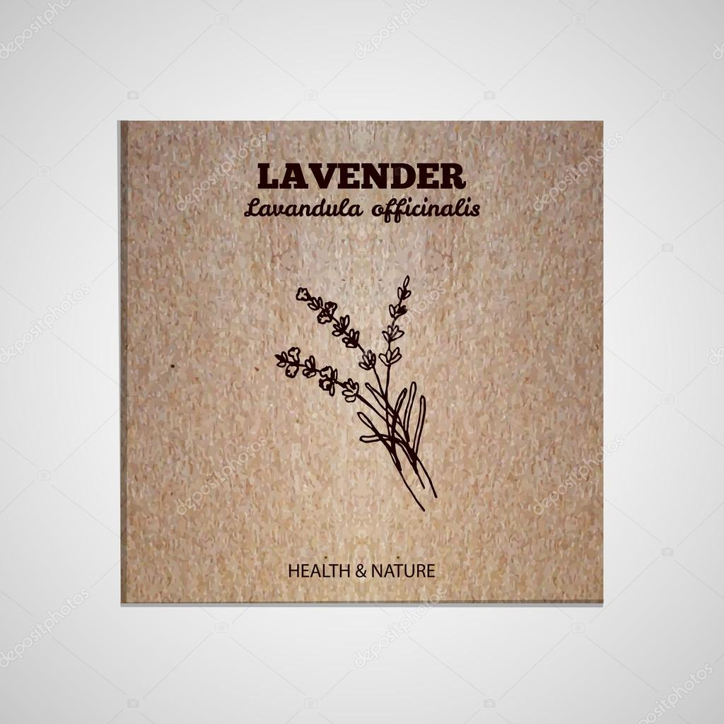 Herbs and Spices Collection - Lavender