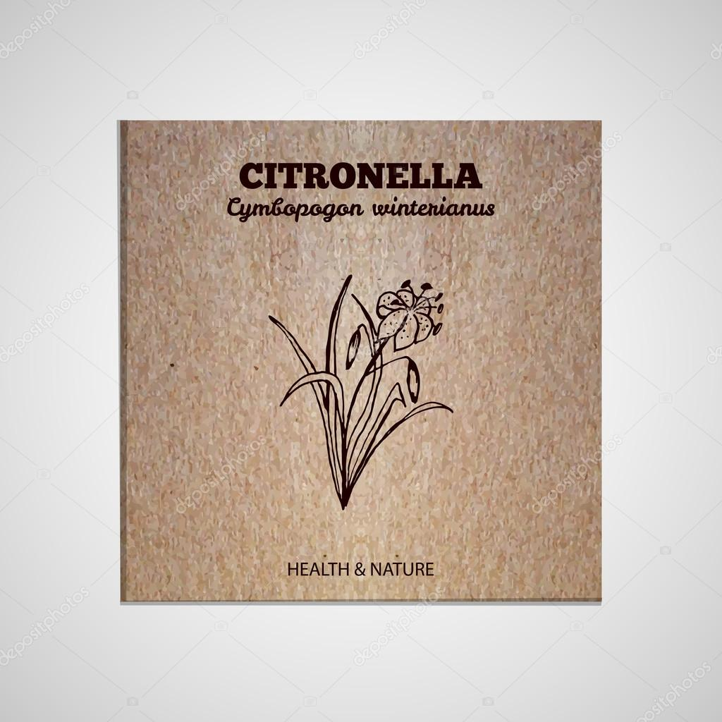 Herbs and Spices Collection - Citronella