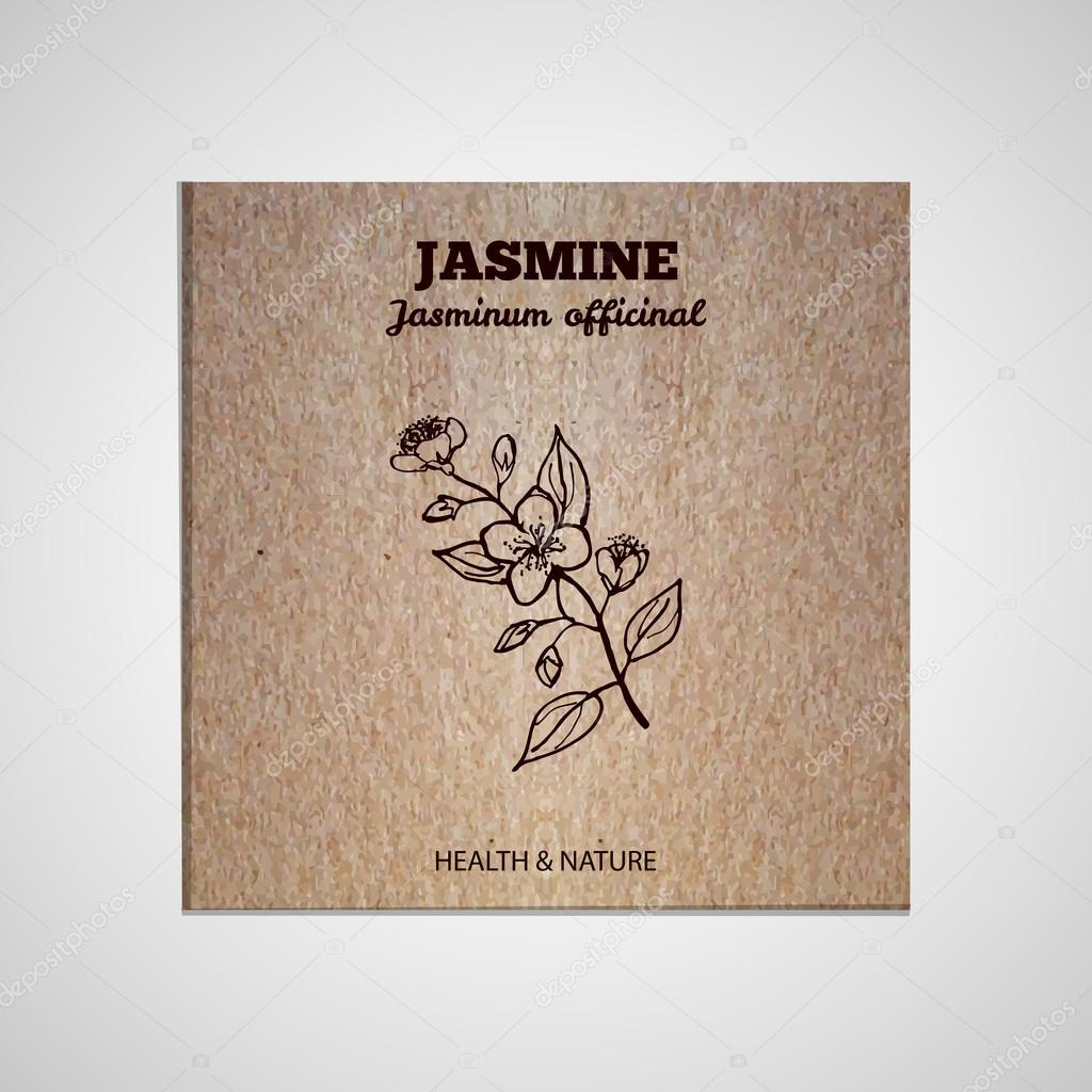 Herbs and Spices Collection - Jasmine