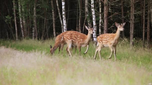 Herde von Wildflecken auf der Weide