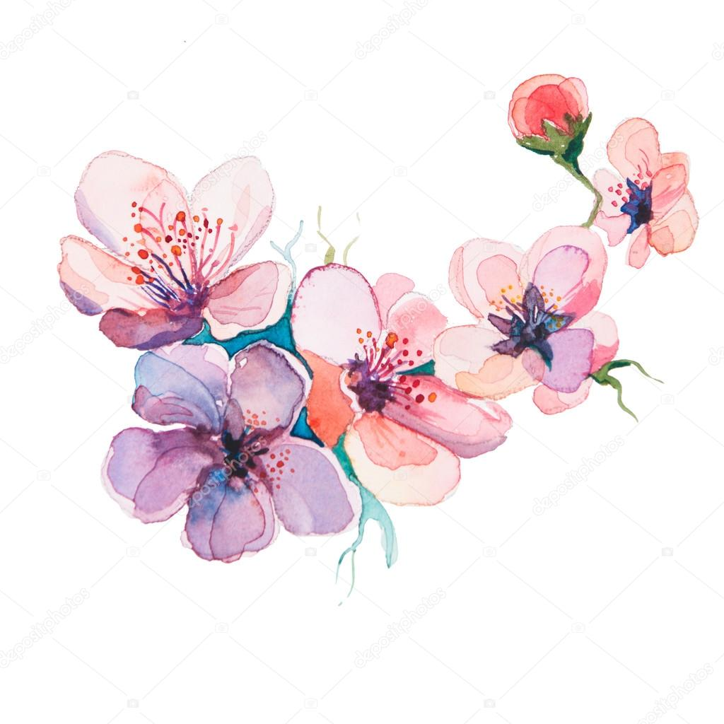The spring flowers watercolor isolated