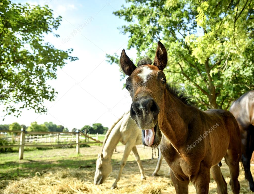 Young horse with funny face