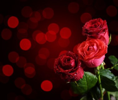 Valentine Roses with bokeh background