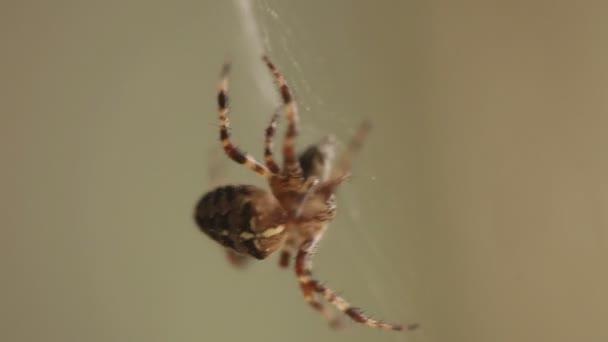 Spinne im Netz aus nächster Nähe