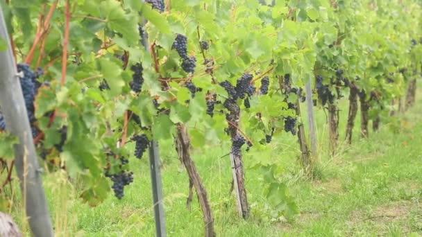 Panorama z vinice
