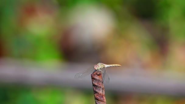 szitakötő a fű