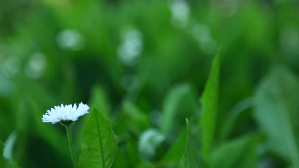 Daisy and lily of the valley