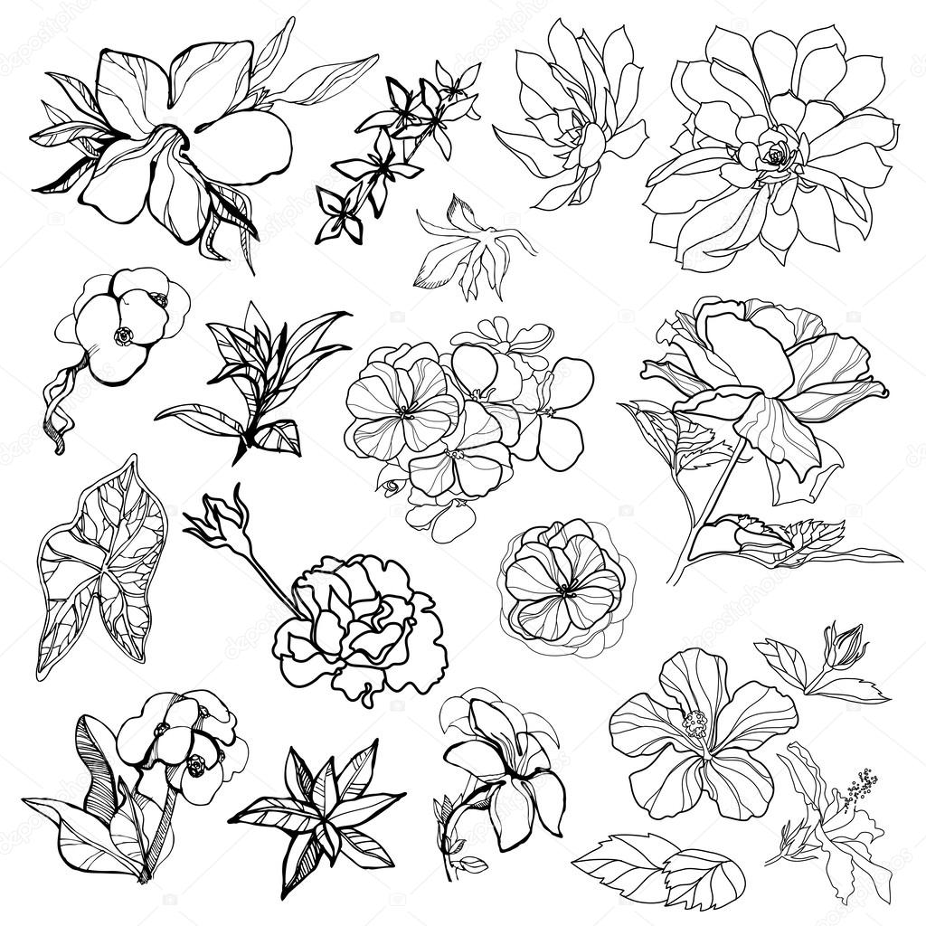 sketches of flowers