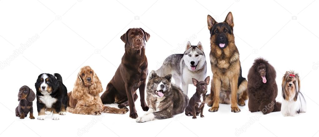 Dog Day Care Kitchener
