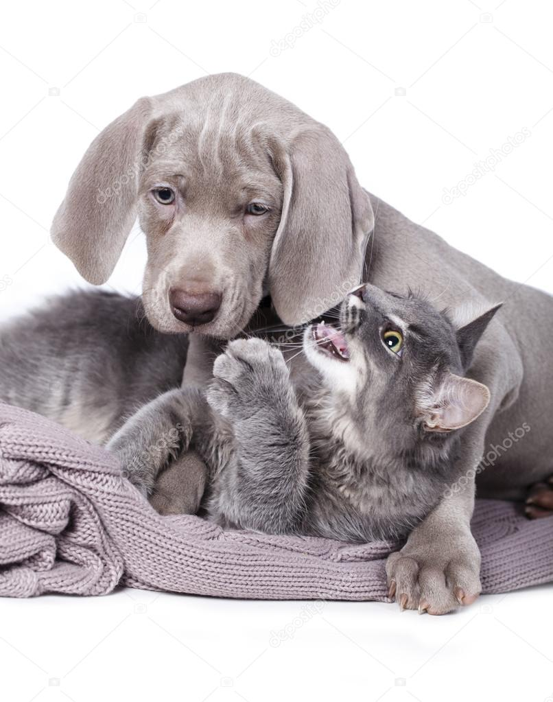 Собака и кошка — Стоковое фото © Lilun_Li #63197509