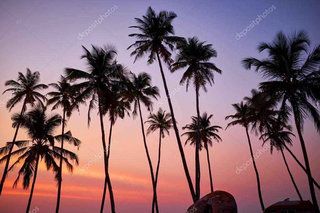 beautiful coral sunset