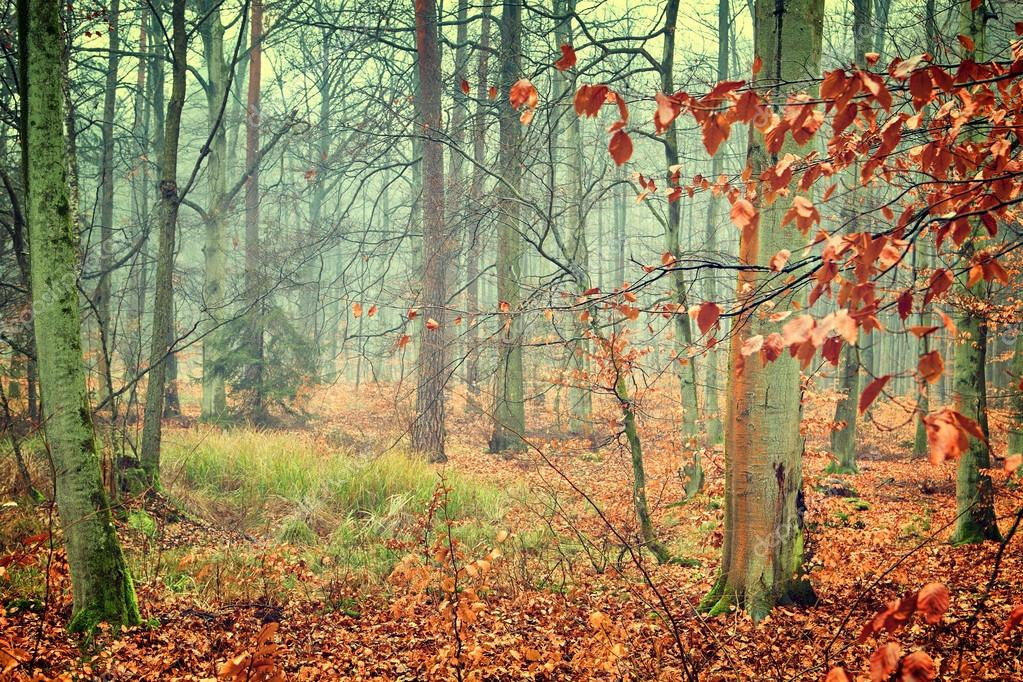 Vintage of autumn forest