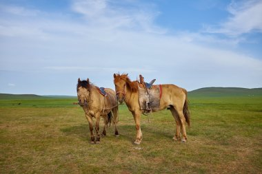 Pair of horses on pasture