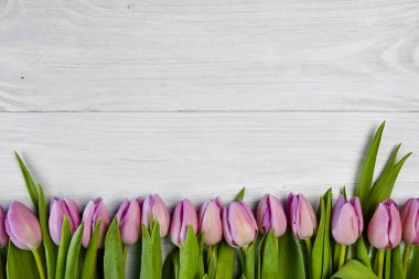 Pink tulips on white wooden background
