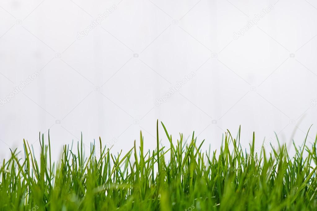 Background with green grass border
