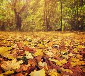 Fotografie na podzim listy v parku