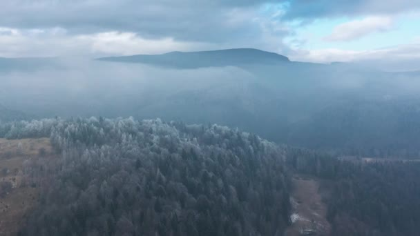 Létají nad nádherným zimním lesem, stromy jsou pokryty mrazem, mlha víří nad horami