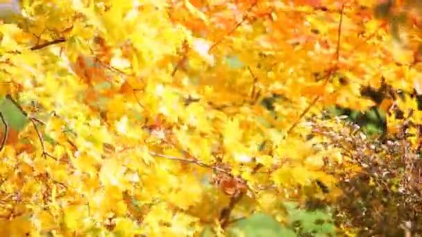 红叶的季节去