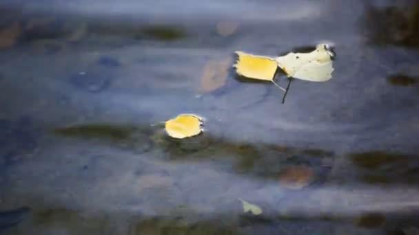 podzimní listy plovoucí na rybník