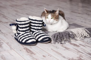 Warm slippers on the background floor