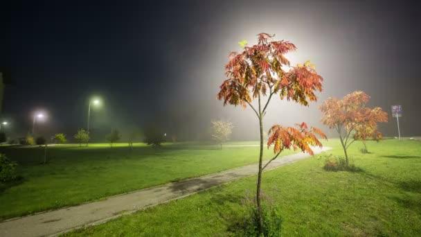Jasan v noci mlha