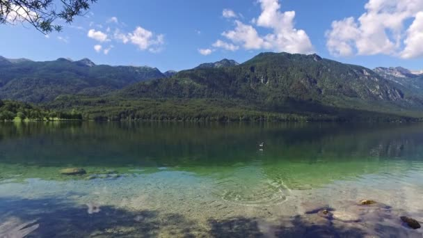 Amazing Bohinj Lake in morning. Duck swims and flies in deep clear water with fish. Gorgeous landscape of Julian Alps. Triglav National Park, Slovenia, Europe.