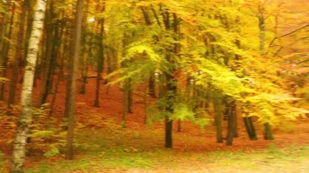 podzimní listnatý les