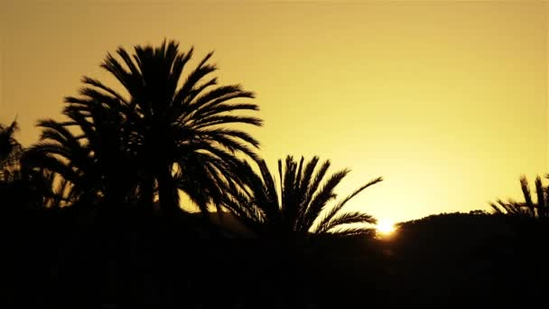 Silhouettes of palm trees against the sky with the setting sun.