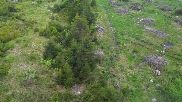 Smíšené hustý les na úpatí Tater, Slovensko