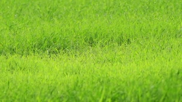 Bylinné rostliny (často jednoduché byliny) jsou rostliny, které nemají žádný trvalý dřevný stonek nad zemí. Bylinkovou rostlinu mohou být anuály, dvouleté nebo trvalé.