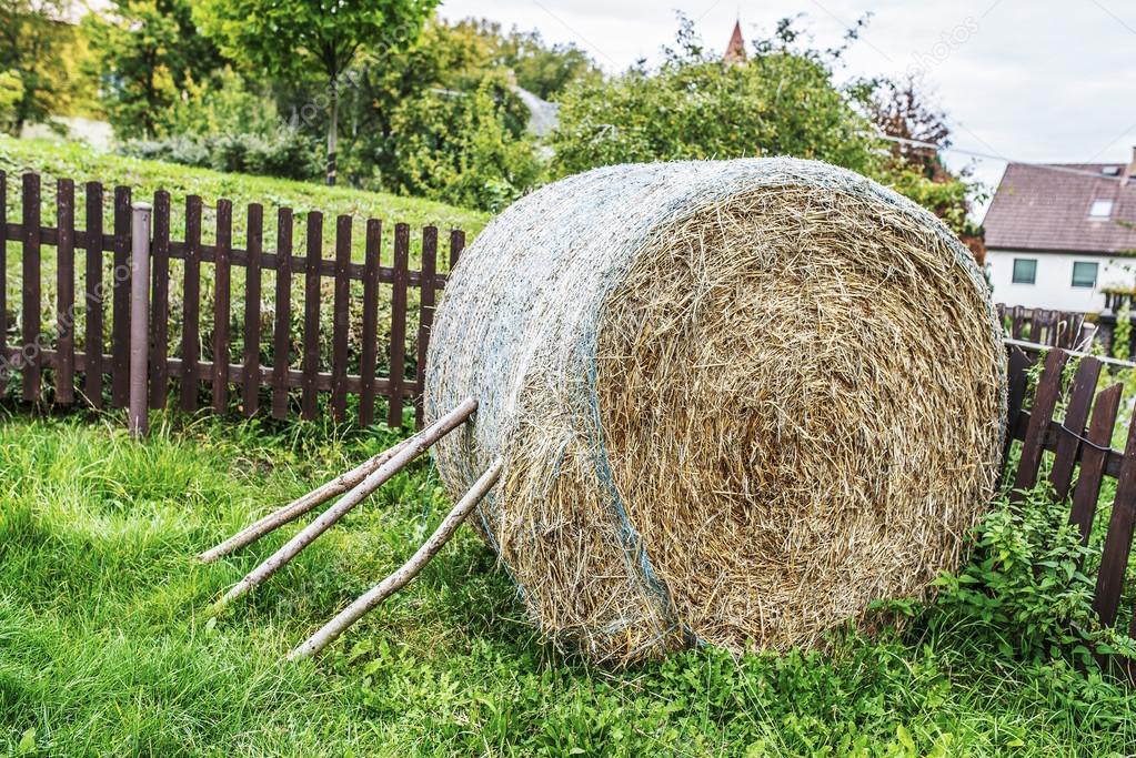 Hay is grass