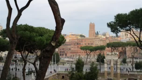 Velký šedý Racek v Římě, Itálie