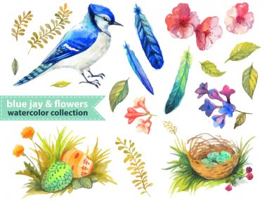 Blue jay and flowers collection