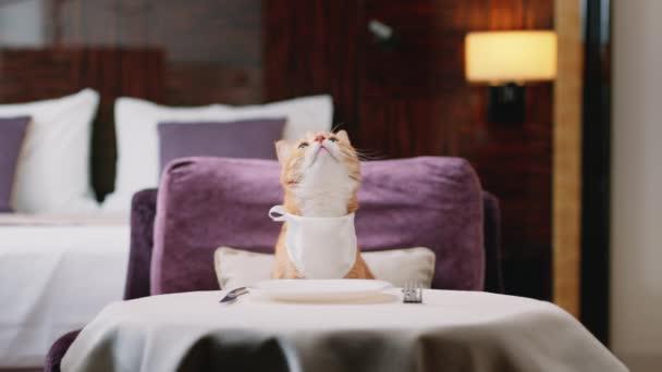 Červená kočka u stolu v pokoji