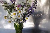 Pleven květiny, vlčí bob a sedmikrásky v váza