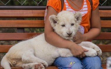 Photos of Africa, Lion cub