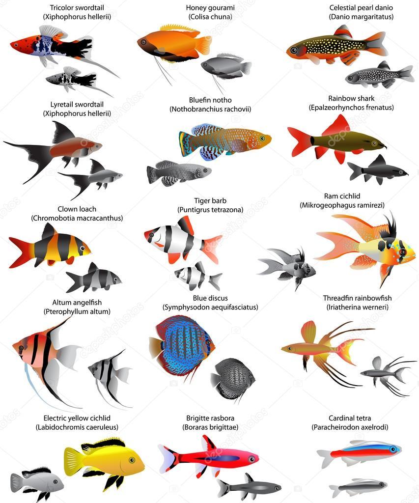 Colecci n de diferentes especies de peces de agua dulce for Especies de peces