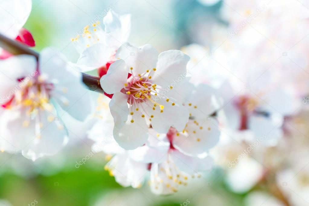 Frühling blühende weiße Frühlingsblumen — Stockfoto © dovapi #101461492