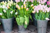 Fotografie Jarní tulipány v prodlení