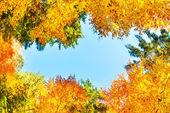 Fotografie Podzim v lese s oranžovými stromy