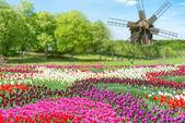 Fotografia campo di tulipani nel parco