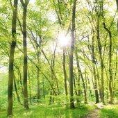 Ráno v sunny forest