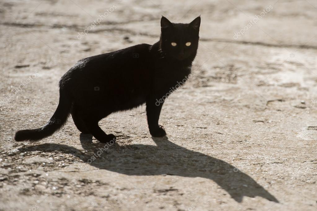 jeune feuille noir chatte webcams de sexe asiatique