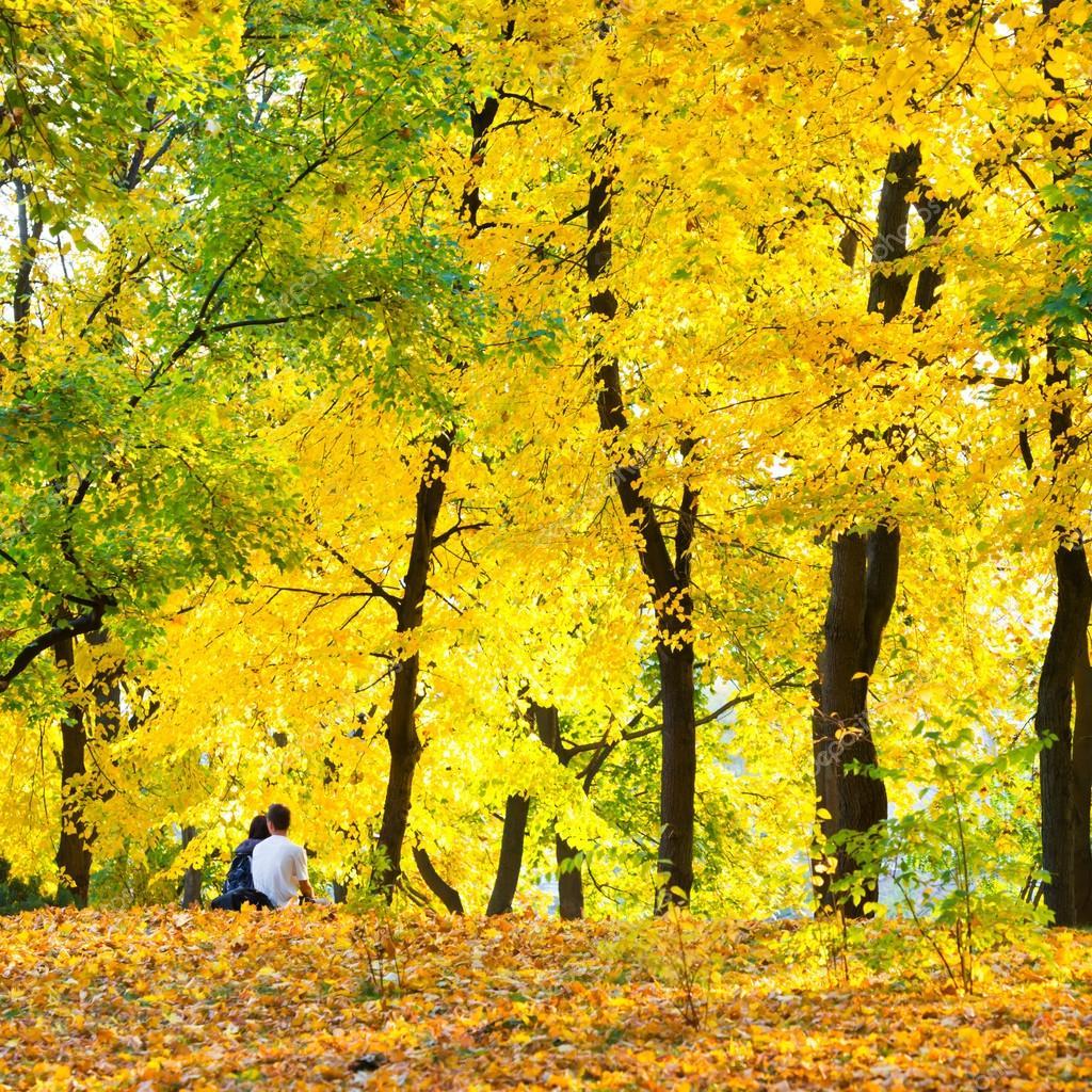 Autumn forest or park