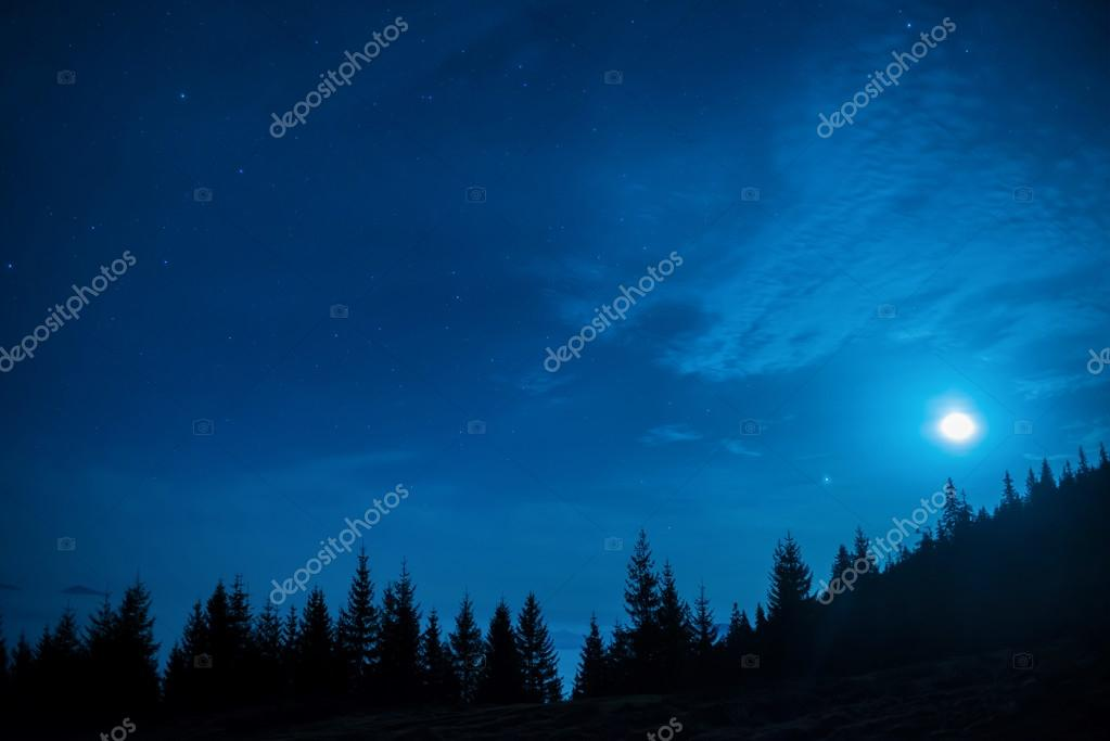 Forest of pine trees at night