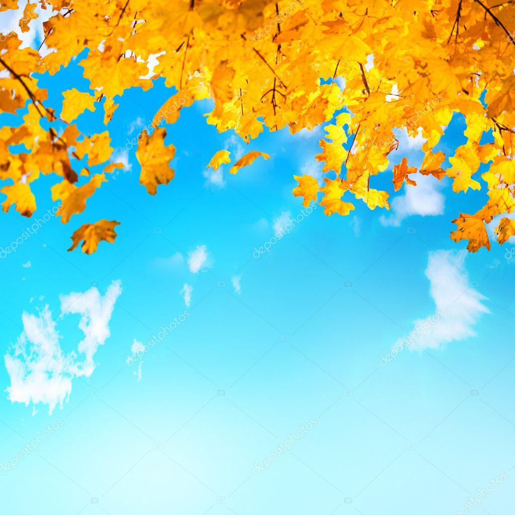 hojas amarillas y anaranjadas — Fotos de Stock © dovapi #86613066