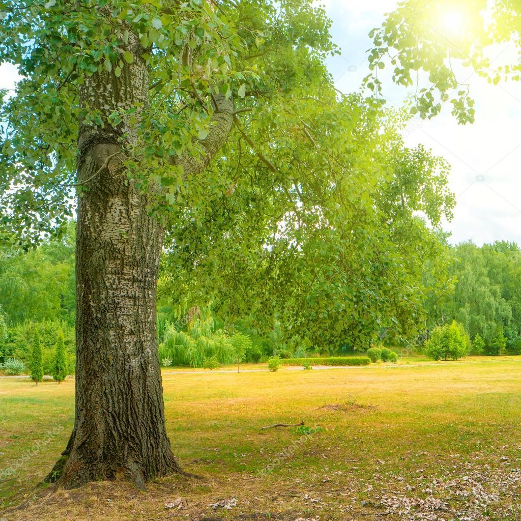 Big tree in the green park under bright sun. Sunny landscape. stock vector