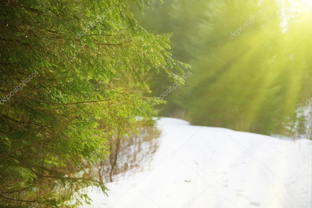Sun light in winter forest